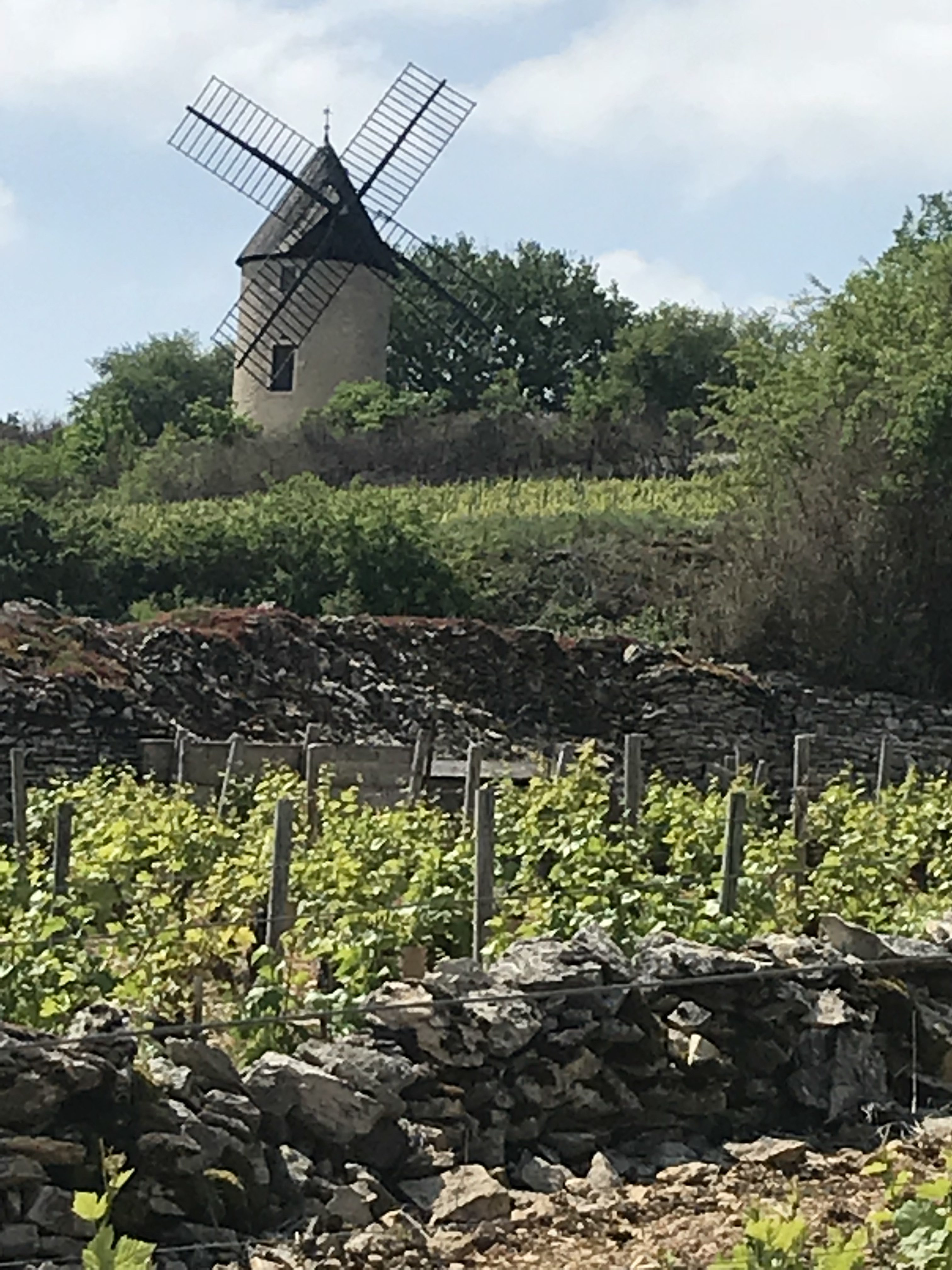 Comment Planter Des Asperges my birthday in burgundy! | what is robin doing now?